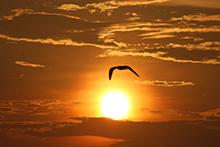Una gaviota parece tocar el sol mientras vuela alto y libre